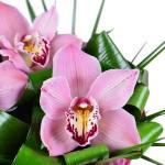 Букет «Волшебная орхидея»
