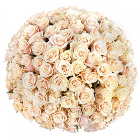 Томск белая роза каталог