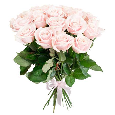 25 светло-розовых роз