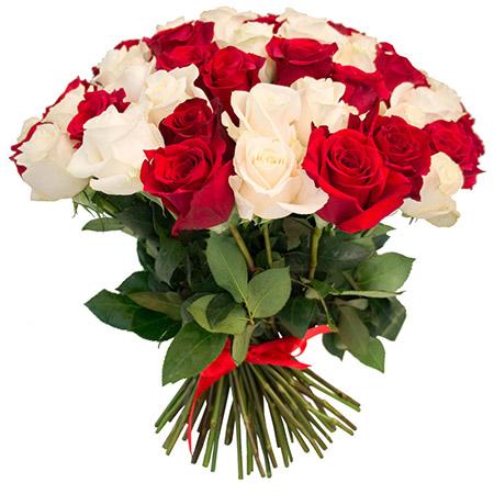 81 красная и белая роза