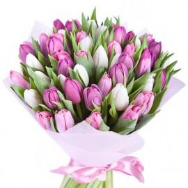 51 белый и розовый тюльпан