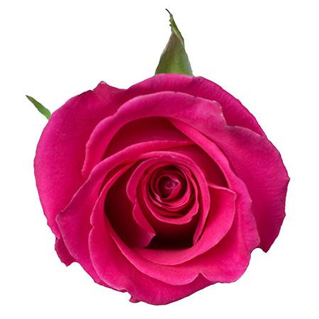 Роза «Topaz»