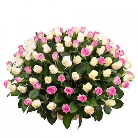125 белых и розовых роз