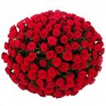 201 роза