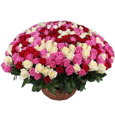 301 роза микс