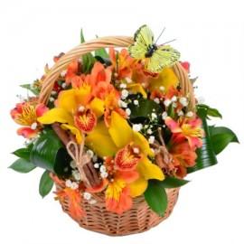 «Румяные орхидеи»